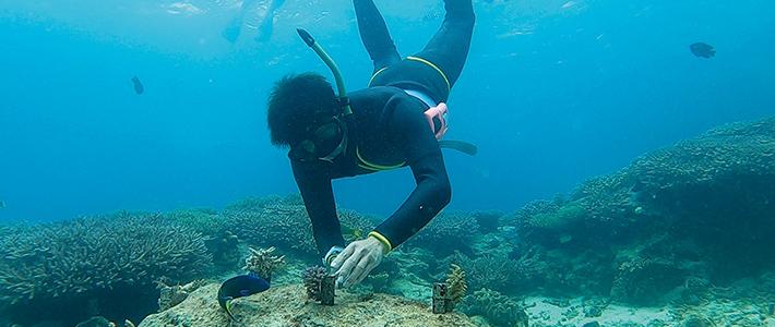 サンゴの植え付け体験
