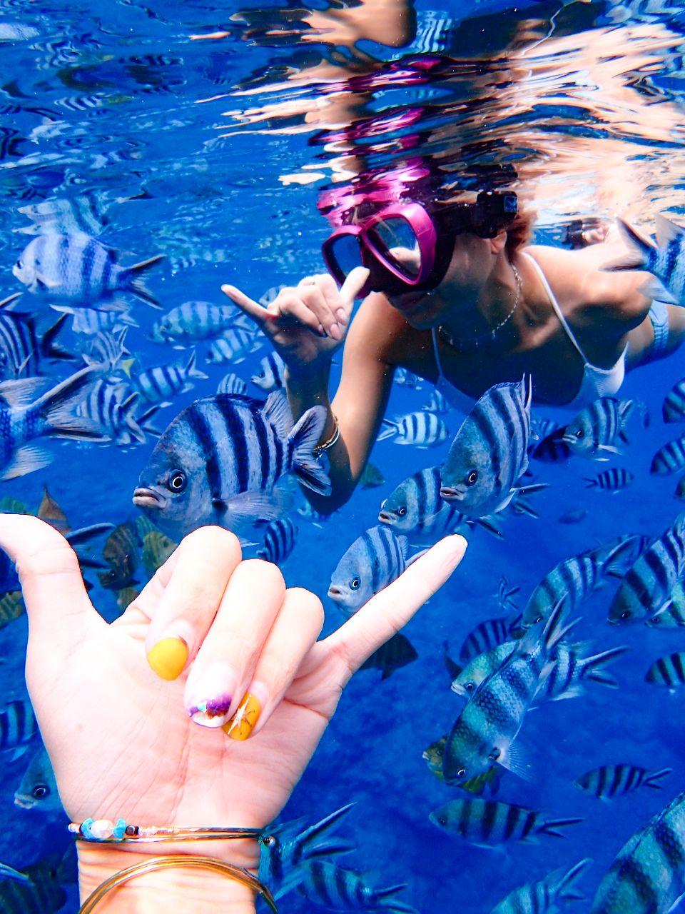 青の洞窟のスノーケリングツアーと熱帯魚&珊瑚礁スノーケル(天然ビーチで熱帯魚&珊瑚礁スノーケル)