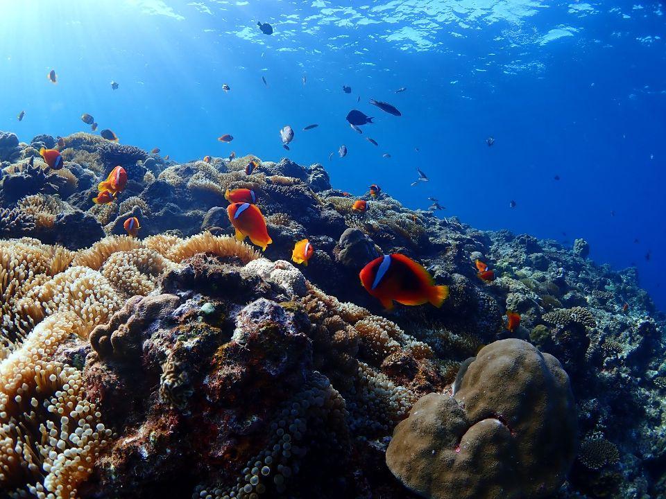 サンゴと熱帯魚の楽園 ボートシュノーケリングツアー